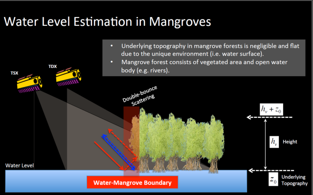 TDX Mangroves