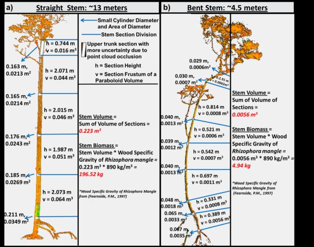TLS_tree