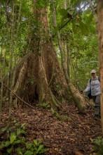 Duncanson, Mondah Forest, Gabon