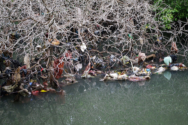 Pollution in Bali Mangroves