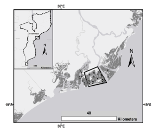 Figure 2. Study area along Zambezi Delta showing plot locations and ALS survey outline. Mangrove canopy cover mapped by Shapiro et al. (2015) is marked in dark gray, from Fatoyinbo et al. (in review)