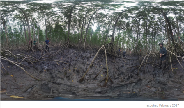 Pongara National Park Mangroves
